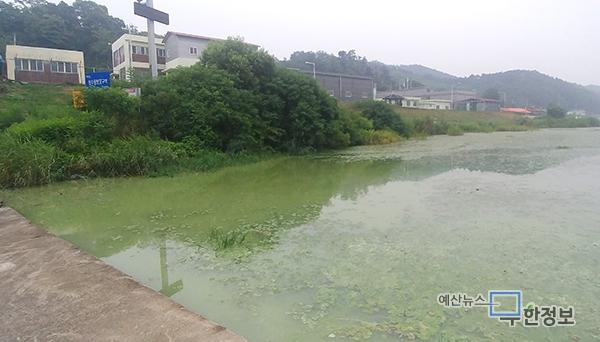 예산읍민 젖줄 무한천 '녹조라떼'